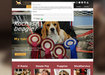 www.beagles.pl
